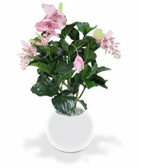 Medinila műnövény gyönyörű 100 cm