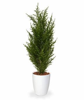 Mesterséges ciprusfa 50 cm