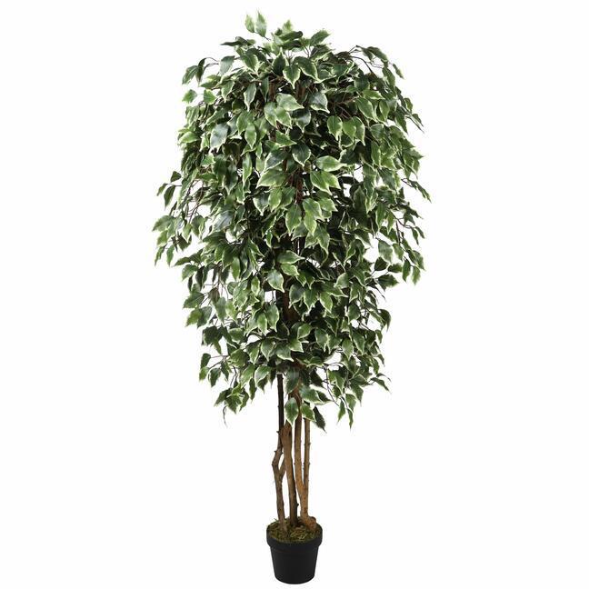 Mesterséges fa Fikus Benjamin zöld fehér 170 cm