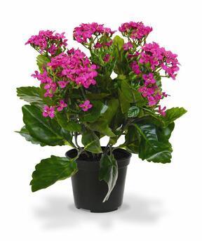 Mesterséges növény Kalanchoa lila 30 cm
