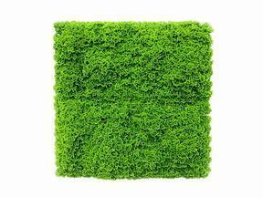 Mesterséges világoszöld moha panel Moswand - 50x50 cm