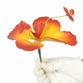 Pillangó virág 20 cm